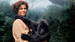 Biografisch filmdrama Gorillas in the Mist vrijdag te zien op België Eén
