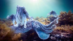 Genieten van natuurschoon in Blue Planet II van Sir David Attenborough