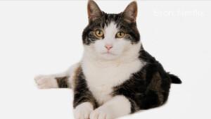 Recensie: Poeslief: een ode aan de kat is niets meer of minder dan homevideo's met commentaar